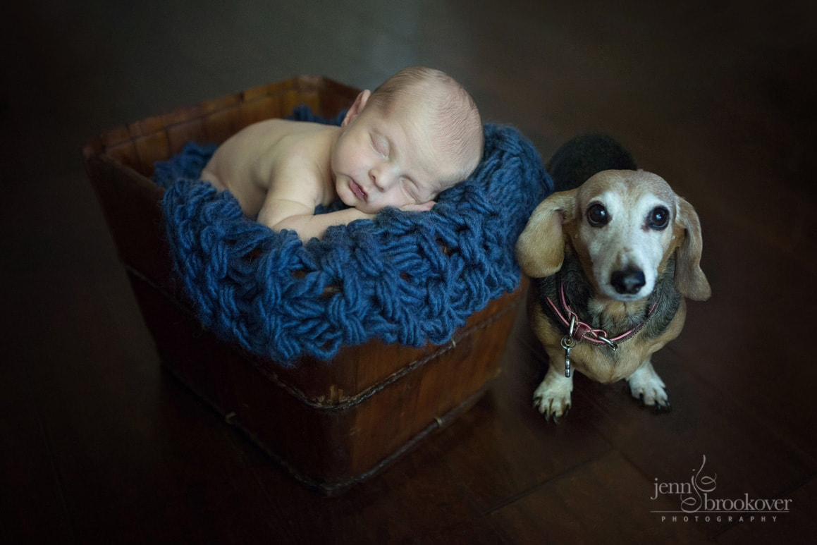newborn in bucket on blue with puppy during photo session